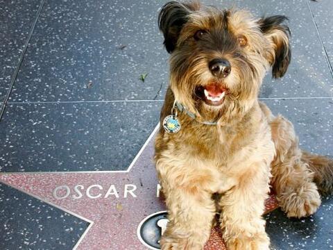Joanne Lefson adoptó a este cachorro y cuando se dio cuenta de qu...