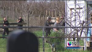Desmantelan red peleas de gallos en Modesto