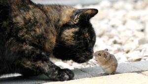 Gato y ratón son mejores amigos