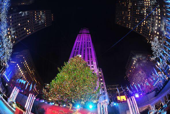 El árbol elegido este año como símbolo de la navida...