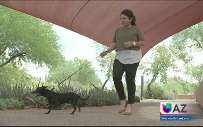 Ofrecen esterilizaciones de mascotas a bajo costo