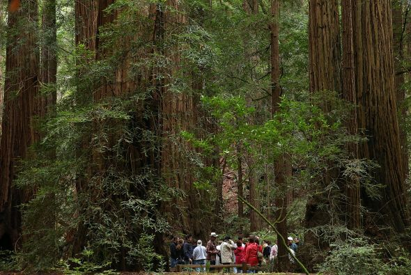 3. Redwood National Park
