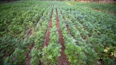 El gobierno peruano puso en marcha un programa en zonas afectadas por el...