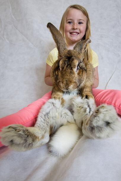 Lo importante para los conejos no es quién tenga el título...