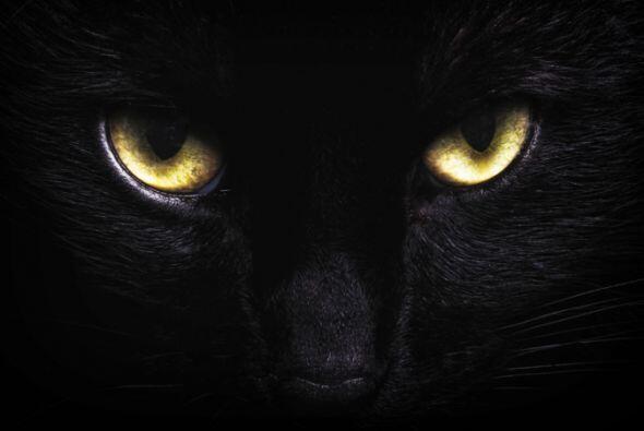 La creencia de que cruzarte con un gato negro es de 'mala suerte' provie...
