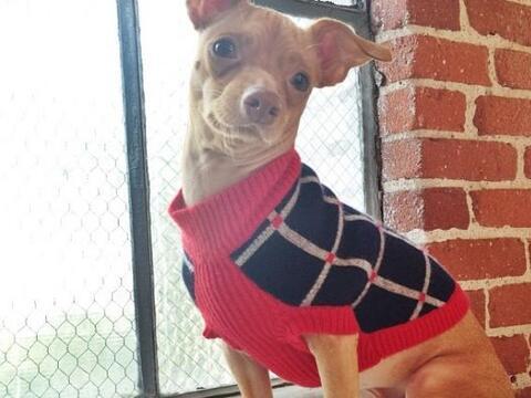 Conoce la historia de este perrito de nombre Tuna que se ha vuelto famos...