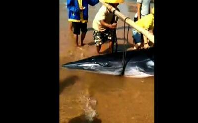 Rescatan a una ballena que quedó varada en la costa china