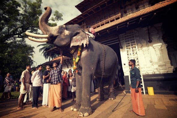 El festival comienza cuando los elefantes son llevados dentro del templo...