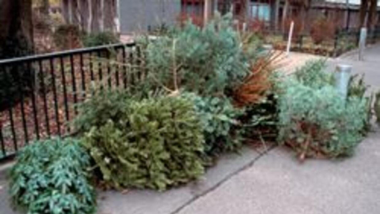 Recicla tu arbol de Navidad - tienes hasta el 16 de enero para hacerlo f...