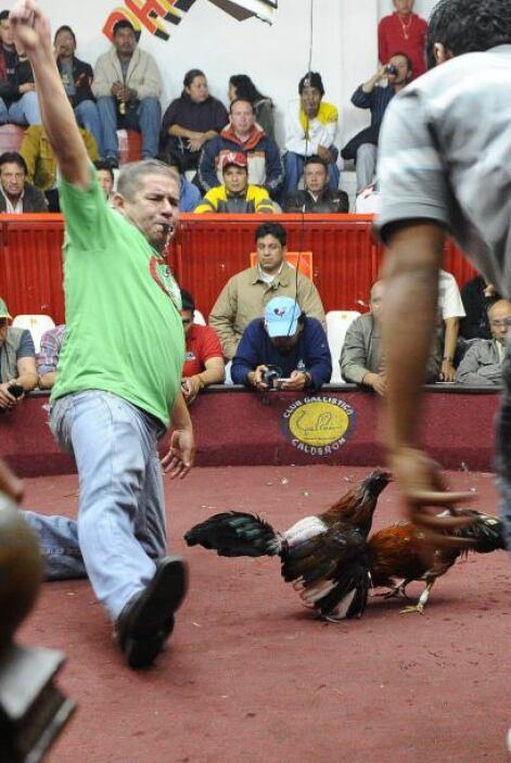 'No es que se prohíban las peleas de gallos, se prohíbe matar al gallo e...
