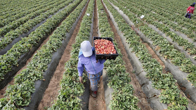 Jornaleros de frutas reciben pagos mínimos