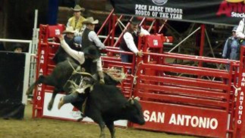 Otros, están esperando para jinetear un toro.