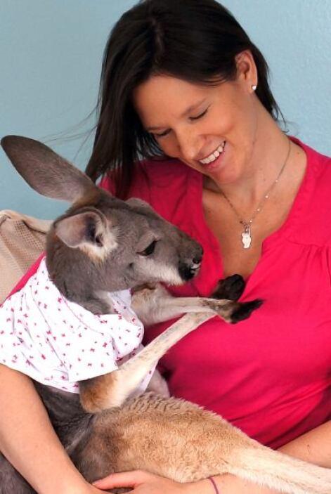 ¡Sí, un canguro como mascota!