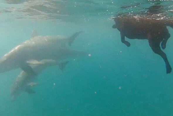 La grabaron retozando con un grupo de delfines en el Océano &Iacu...