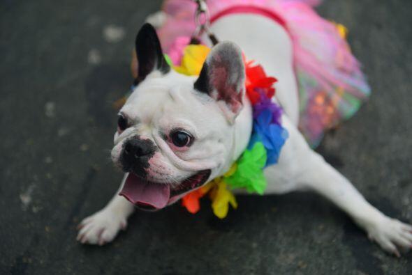 Y para mascotas adorables está esta chica cuyo atuendo hawaiano la hacía...