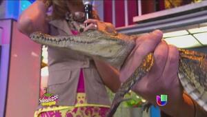 Lo que no sabías del cocodrilo