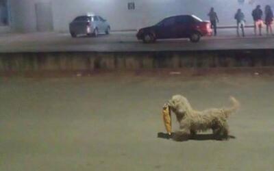El 'saqueadorcito', un perrito que aprovechó el gasolinazo en México par...