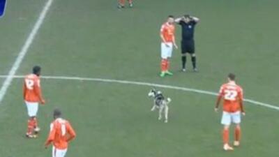 Un perro se metió al campo de juego.
