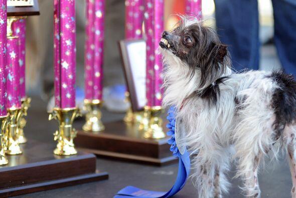 Ahora tiene dos años, un hogar y un premio al perro más feo del mundo. P...