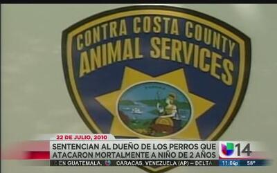 Sentencian al dueño de los perros que atacaron mortalmente a niño de 2 años