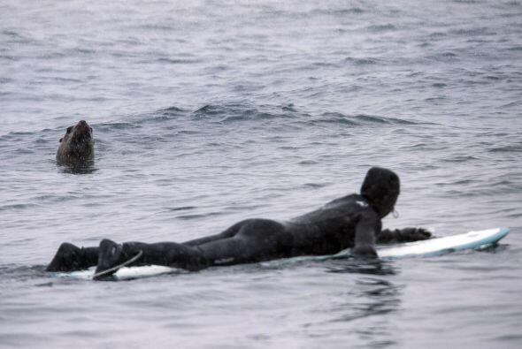 Es raro que estas criaturas marinas se acerquen tanto a los humanos.