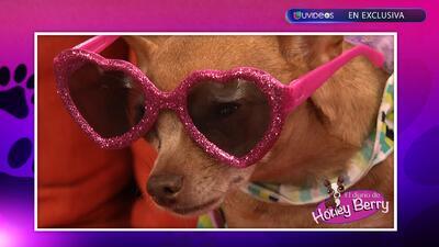"""Honey Berry"" más diva que Ana Patricia González"