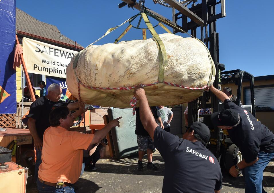 Calabazas gigantes California 2015