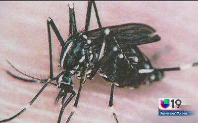 Alerta por virus Zika