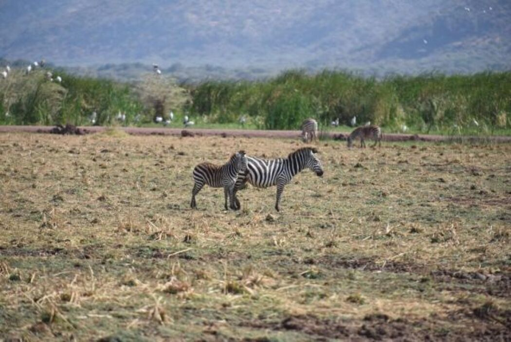 El continente africano se caracteriza por su extensa variedad de fauna.