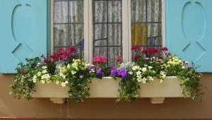 Aquí, algunos 'tips' para diseñar tus jardineras como toda una experta.