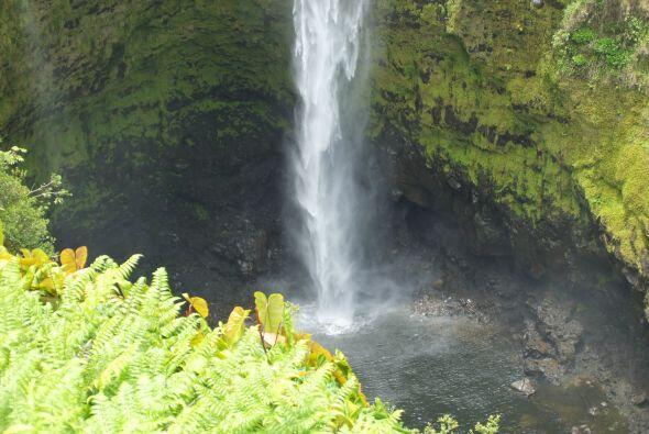 """""""La ciudad de Hilo está llena de cascadas y es todo verde, como si estuv..."""
