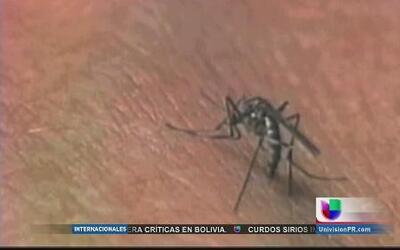 Se declara epidemia del virus chikungunya en Puerto Rico