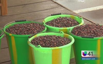 El ébola aumentaría el precio del chocolate