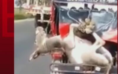 Indignación en Perú por un hombre que transporta a un burro en un moto-taxi