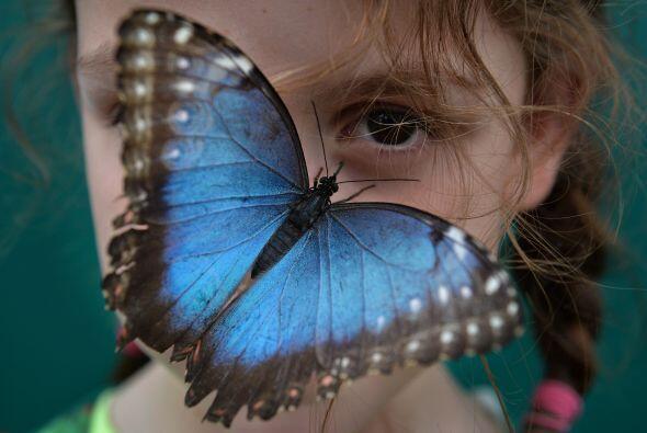 El Museo Nacional de Historia Natural es un atractivo imperdible pues co...