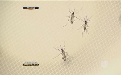 Descubren mosquitos portadores de Zika en Miami Beach