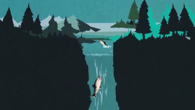 Lo que hay detrás de la pesca del salmón Screen%20Shot%202015-11-02%20at...