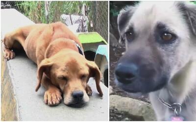 Refugio para animales en Costa Rica cuida al menos 700 perros abandonados