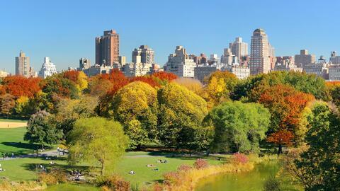 Los árboles del Central Park, en Nueva York.