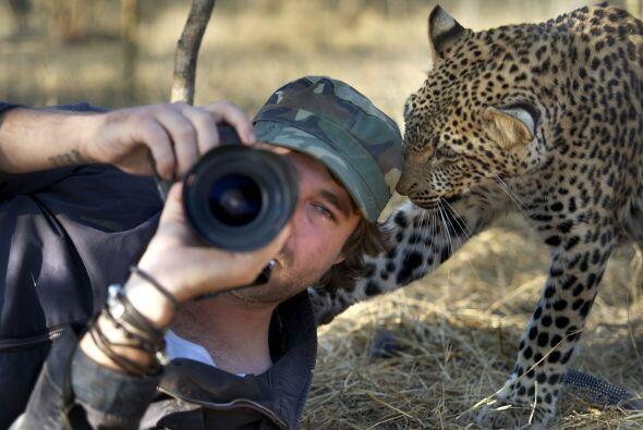 Este leopardo parece que sólo apareció para que le tomaron una selfie.