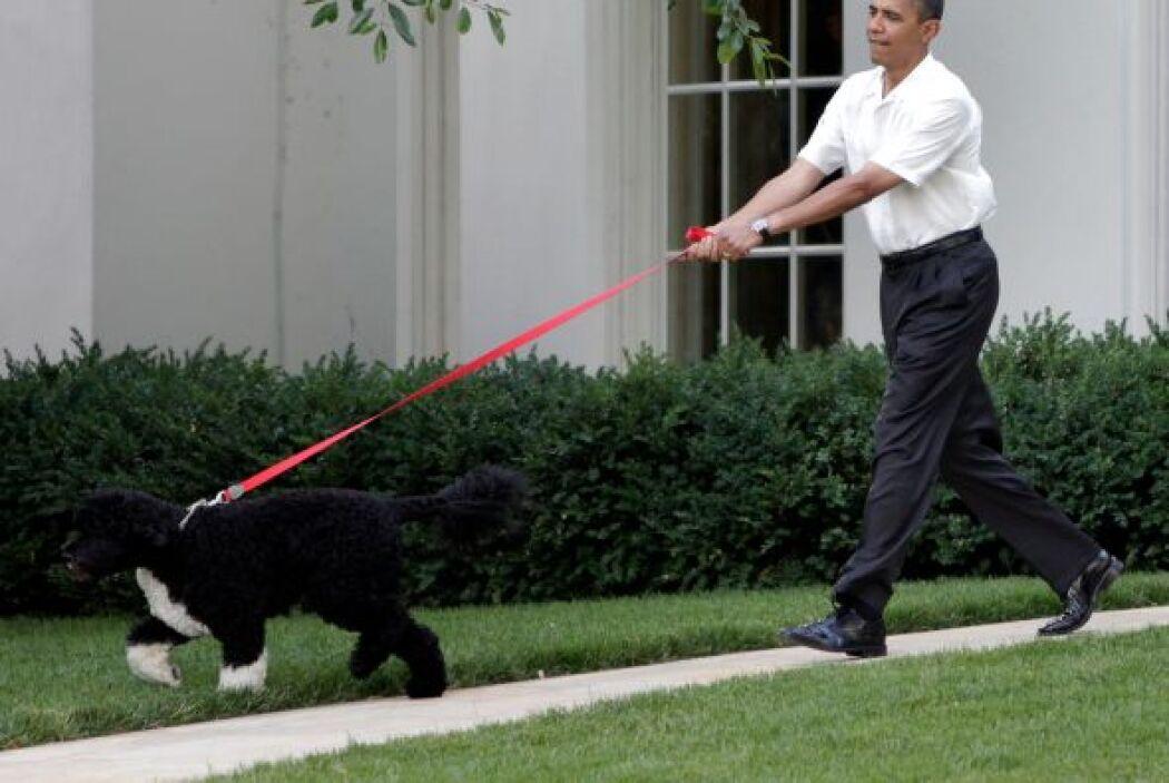 Es importante destacar, que son perros con ánimo para entrar de lleno a...