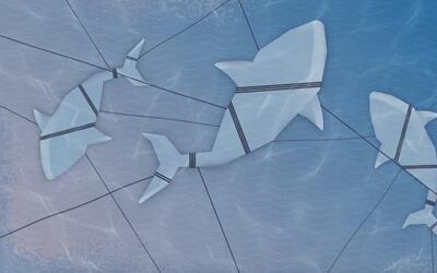 La pesca incidental es la principal amenaza a los tiburones del mundo