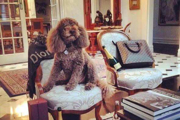 A los dueños de estos lindos perros no les importa compartir con ellos t...