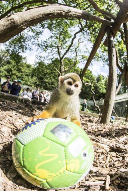 Así viven los animales la fiebre del fútbol