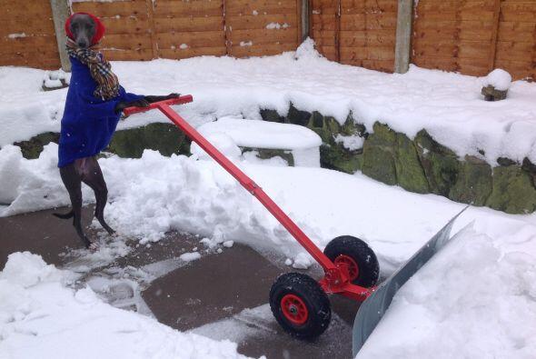 En invierno alguien tienen que hacer el trabajo pesado.