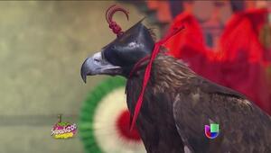 Conoce las características del ave emblemática de México