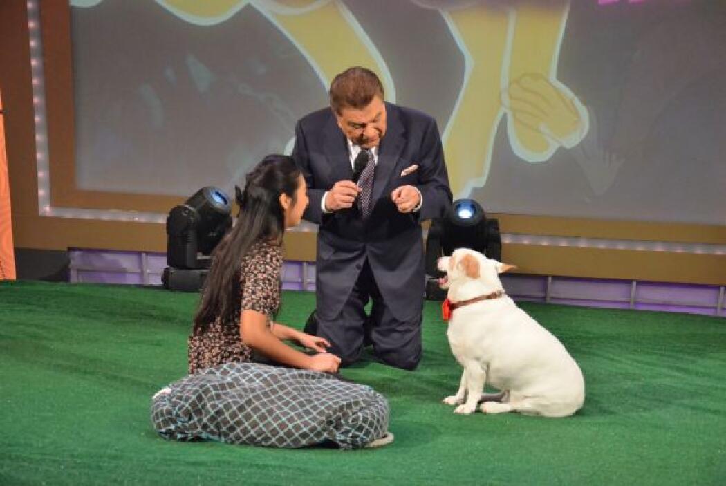 El tercero en entrar en escena fue 'Bolt', un perrito que ha sido ganado...