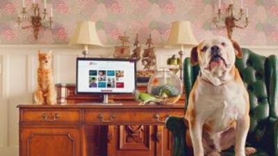 Nueva campaña publicitaria utiliza mascotas para hacer un llamado a sus...