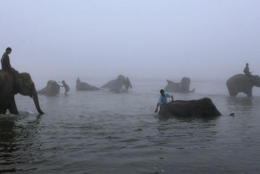 La World Elephant Polo Association (WEPA), piensa plantear con el Comité...