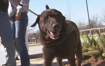 Veterano de guerra adopta a un perro militar que fue rescatado en Kuwait